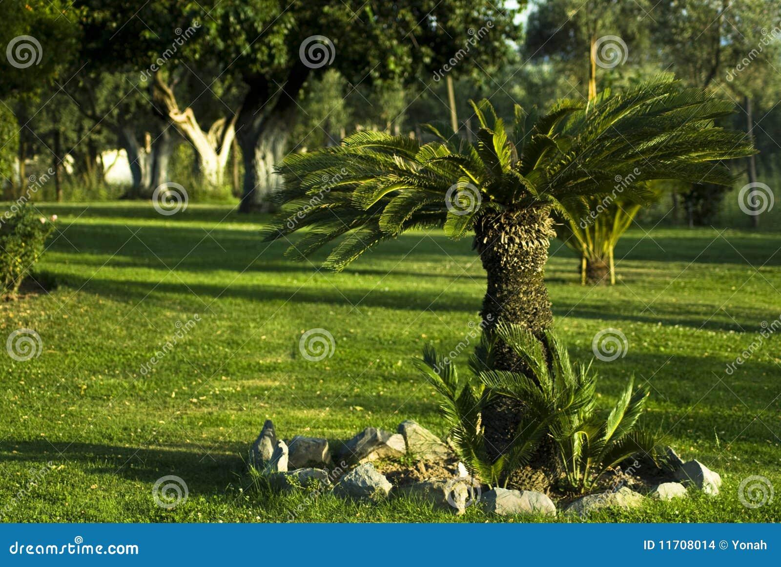 сад меньший вал sod ладони