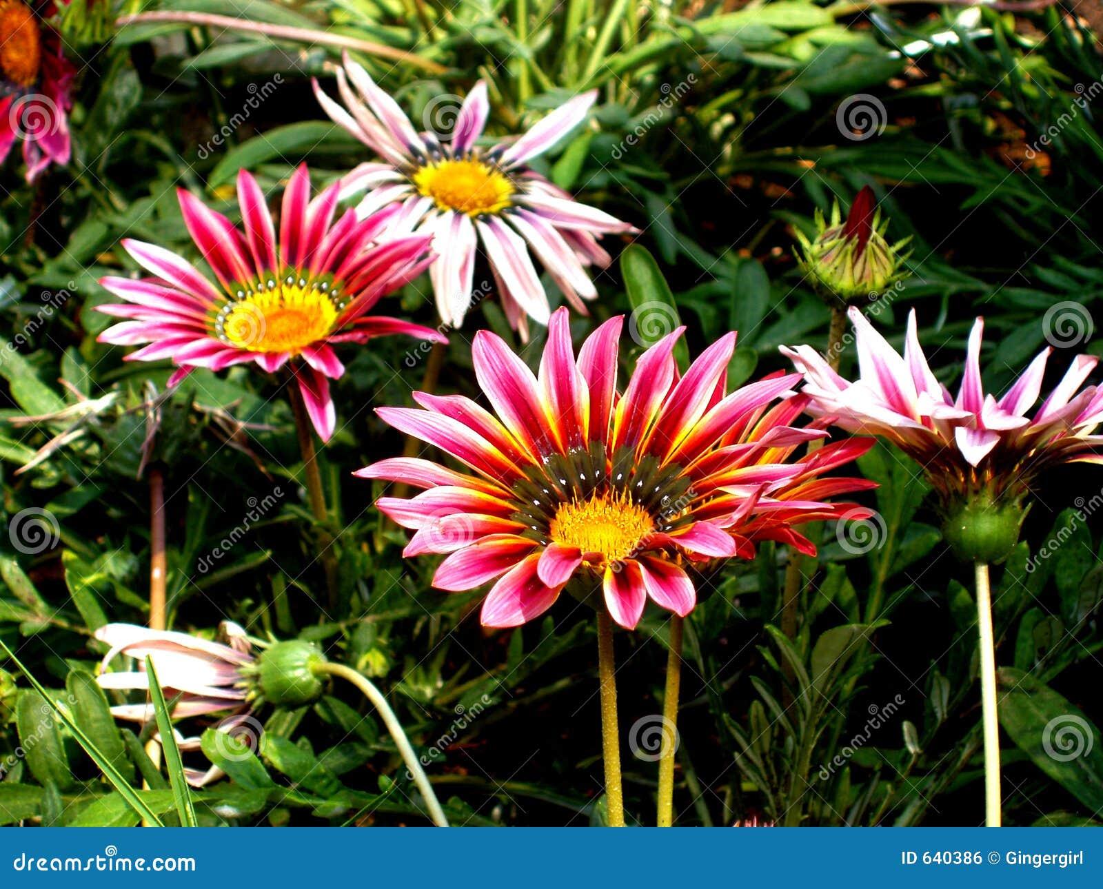 Download сад цветков стоковое фото. изображение насчитывающей вырастите - 640386