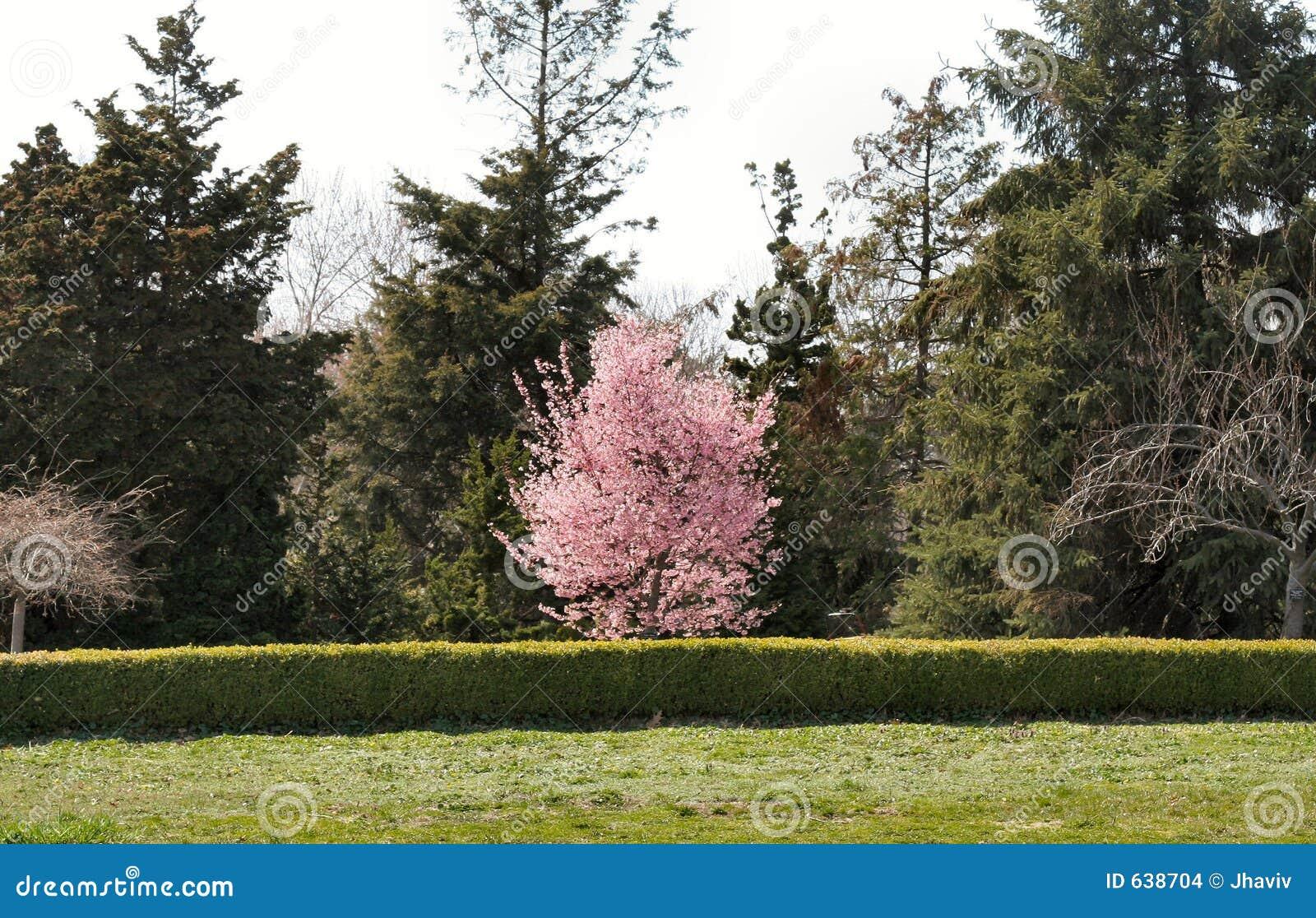 Download сад стоковое фото. изображение насчитывающей валы, вал - 638704