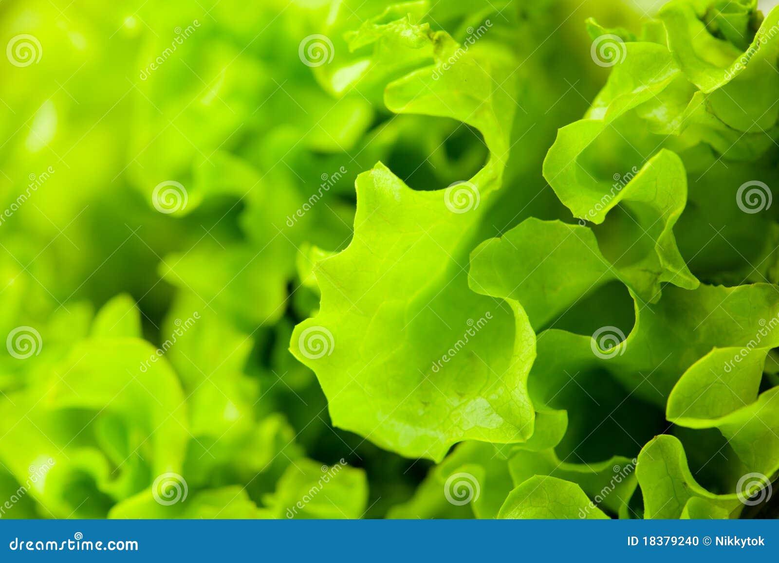 салат салата