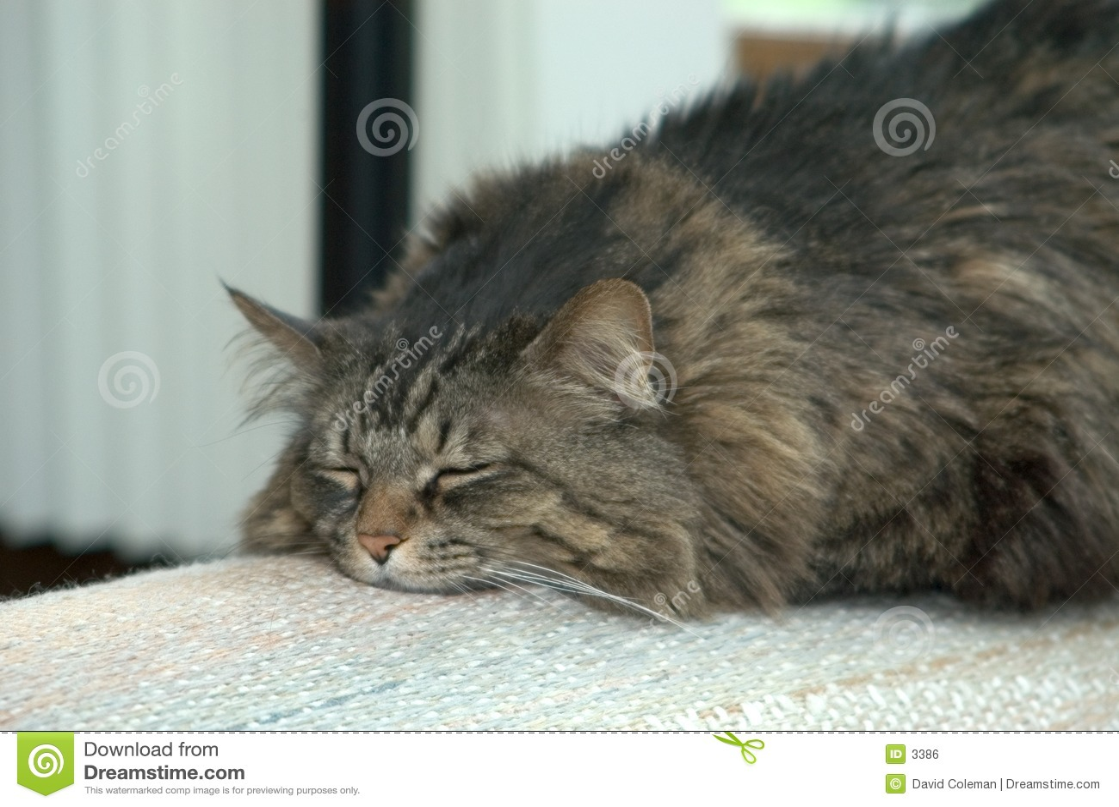 сало кота ali