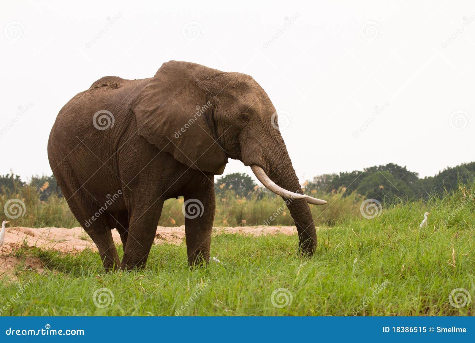 сафари Зимбабве