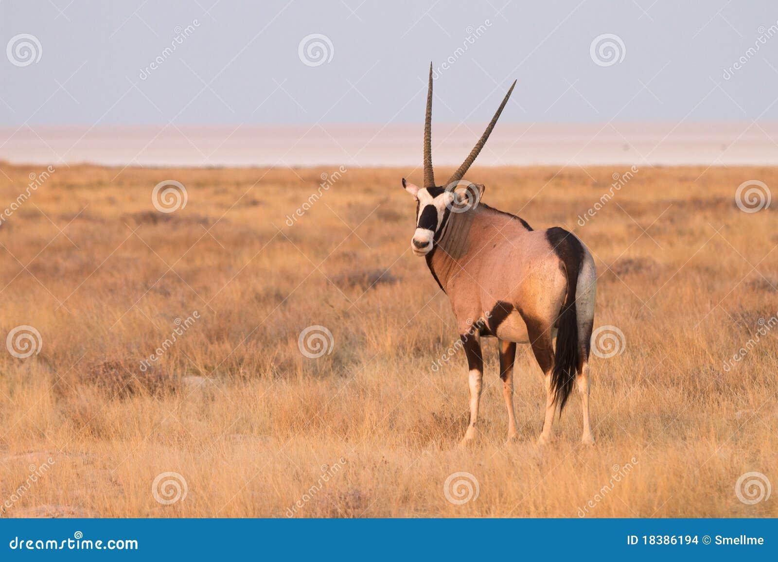 сафари Намибии