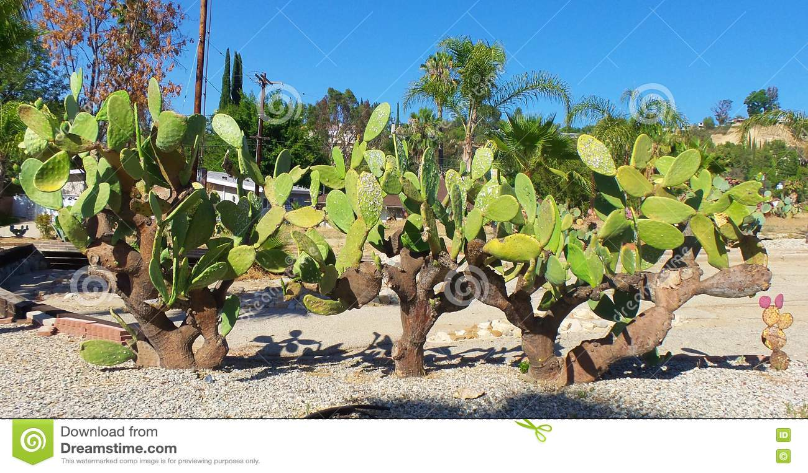 Сад кактуса - сохранение воды