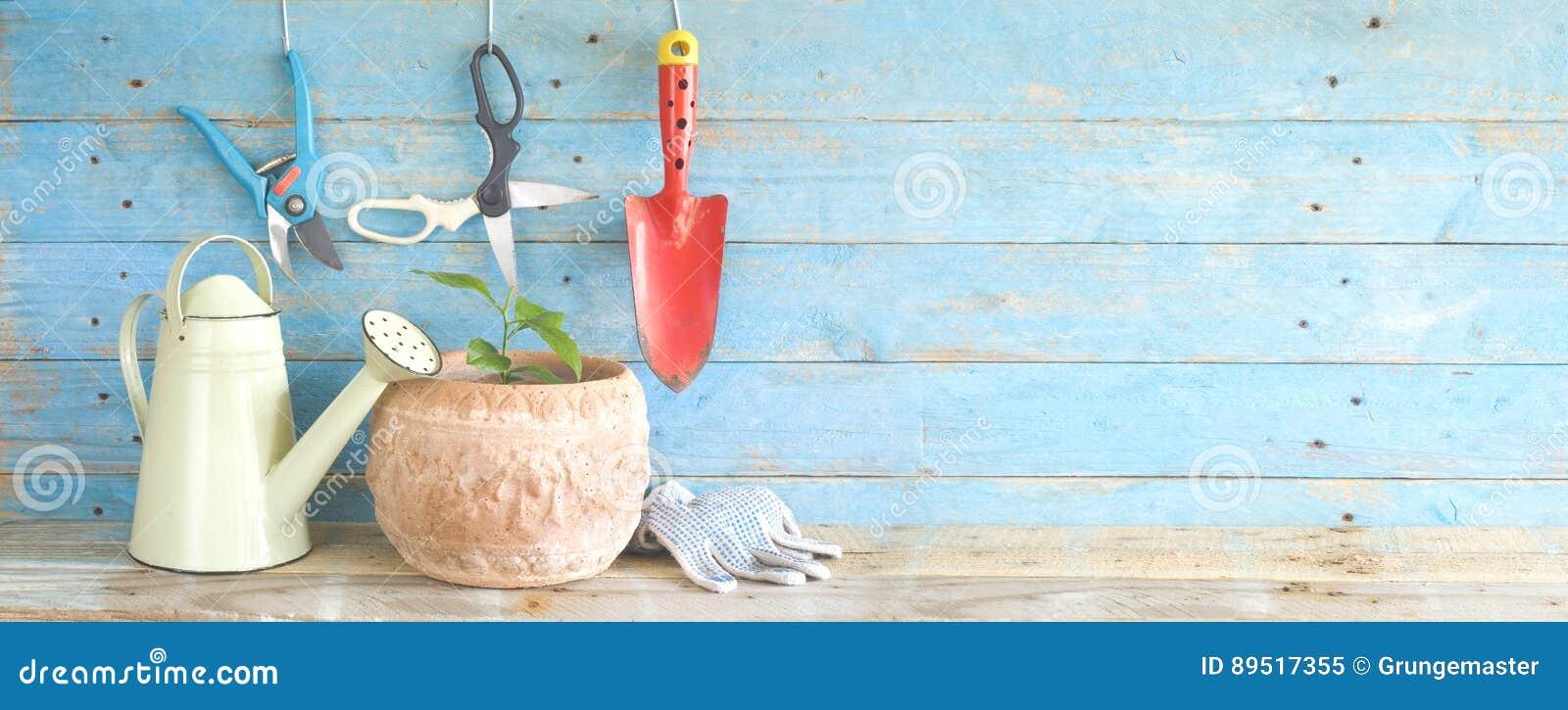 Садовничая инструменты и молодое дерево лимона