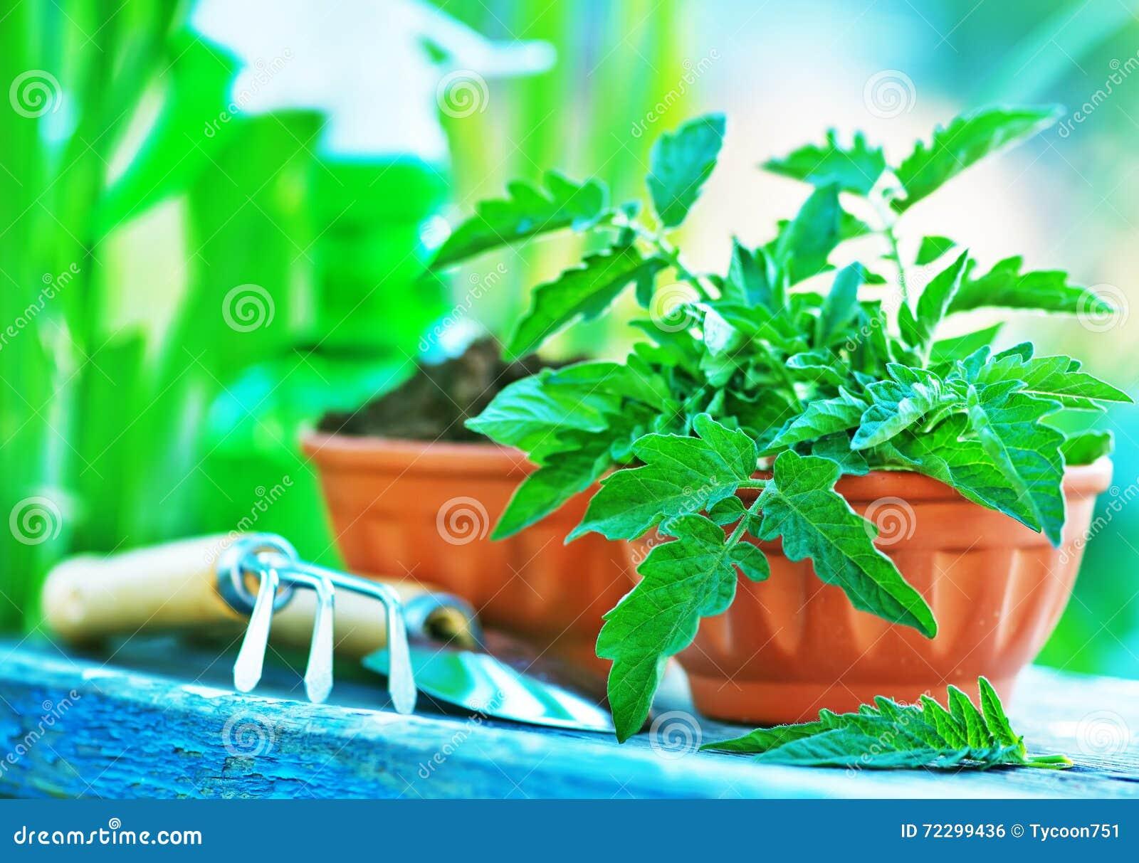 Download садовничая утварь стоковое фото. изображение насчитывающей стойка - 72299436