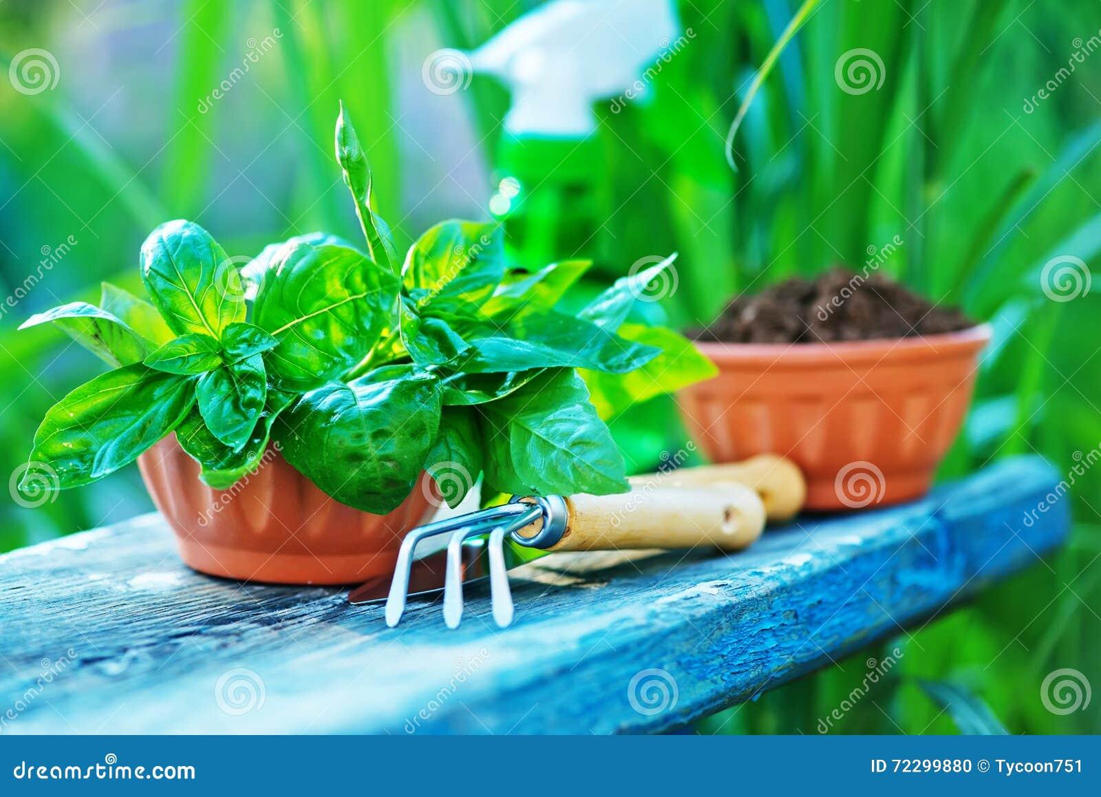 Download садовничая утварь стоковое фото. изображение насчитывающей листья - 72299880