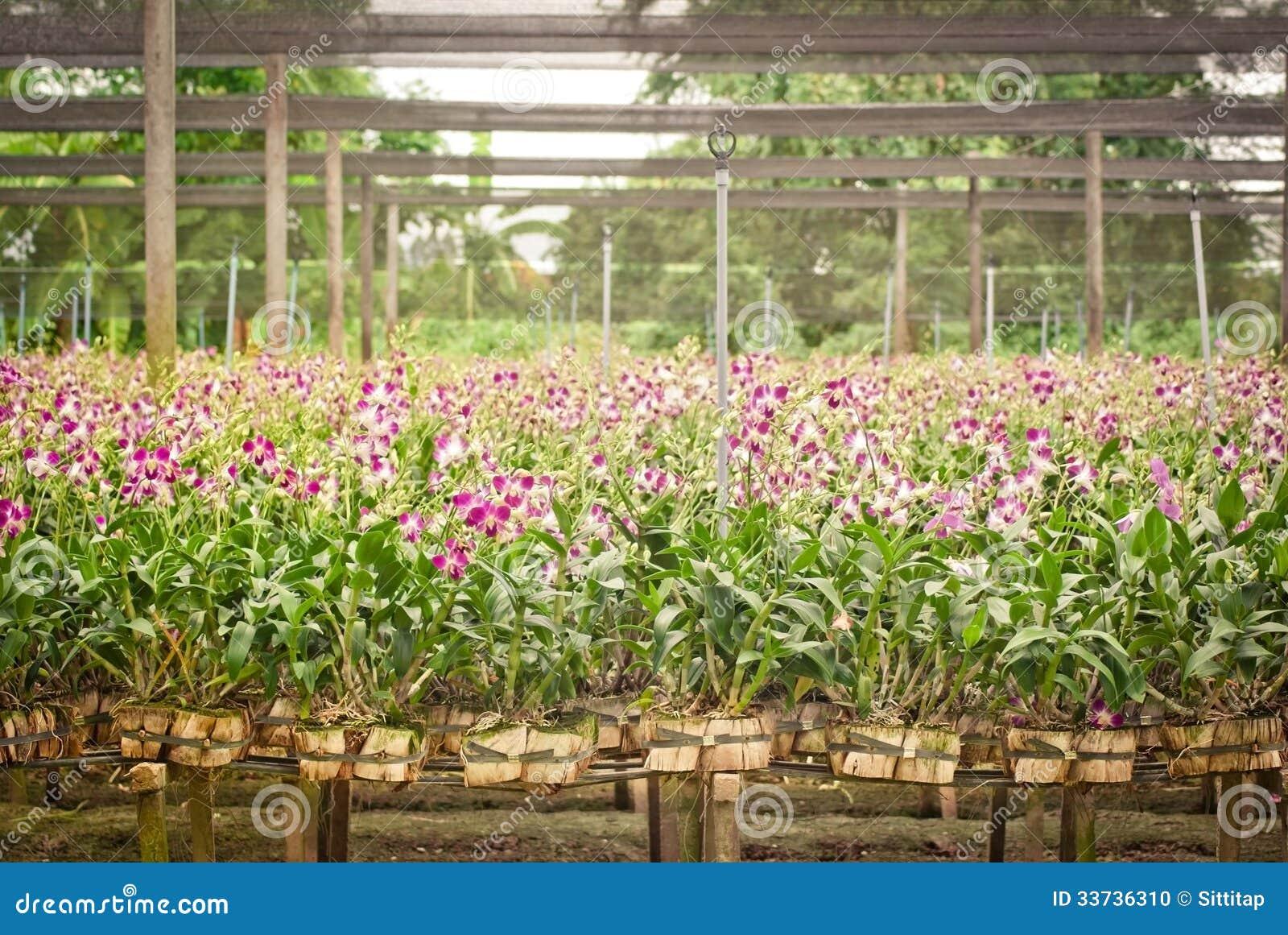Сад орхидеи