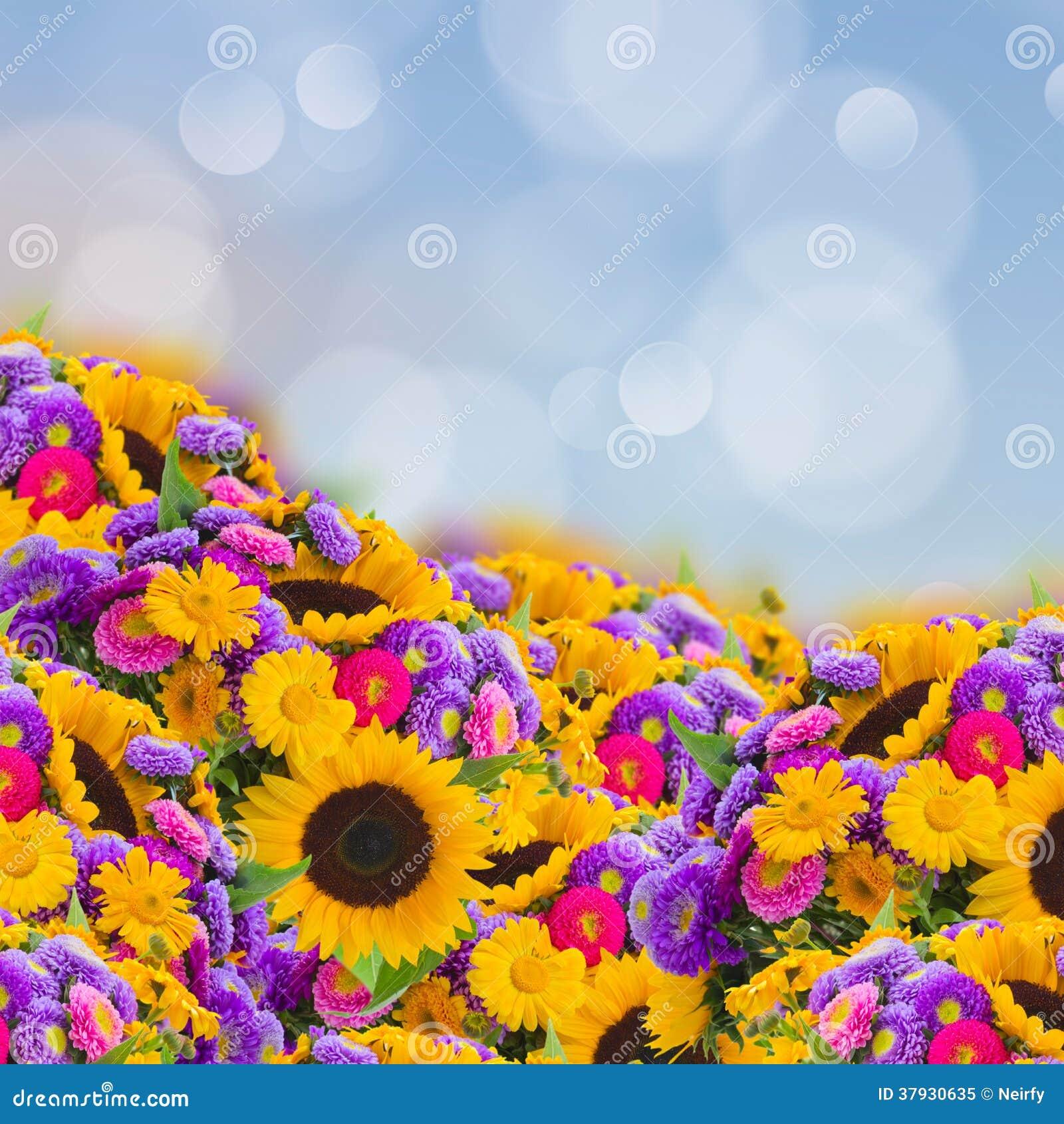Сад цветков с солнцецветами