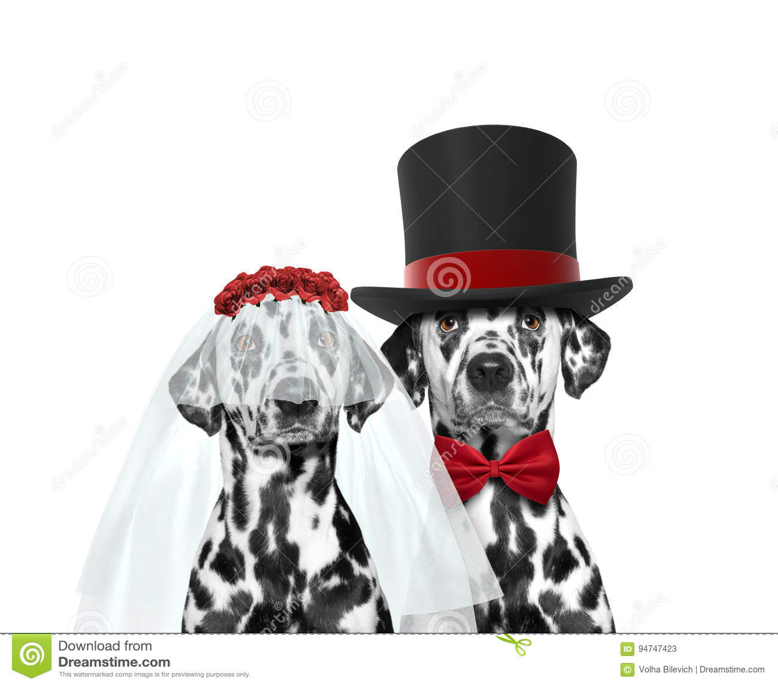 Свадьба собаки счастливая Изолировано на белизне