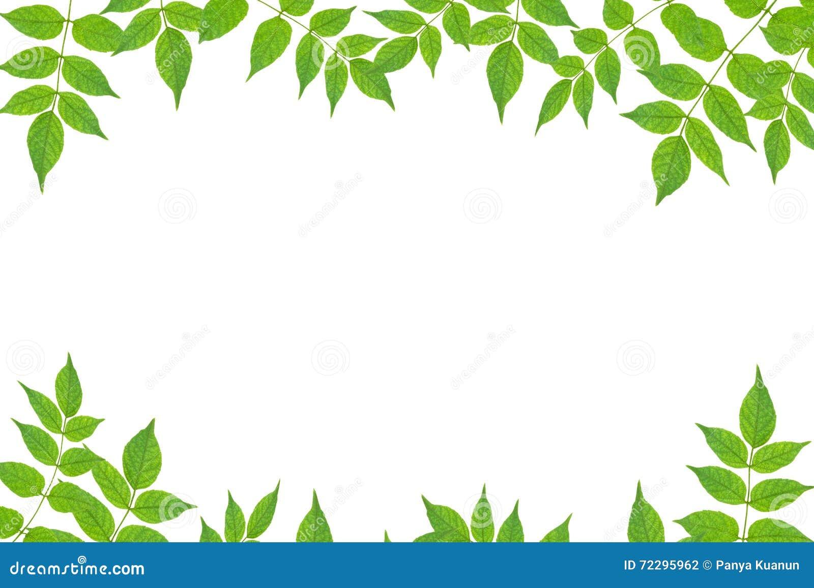 Download Свежая зеленая рамка лист изолированная на белой предпосылке Стоковое Фото - изображение насчитывающей листья, дисплей: 72295962