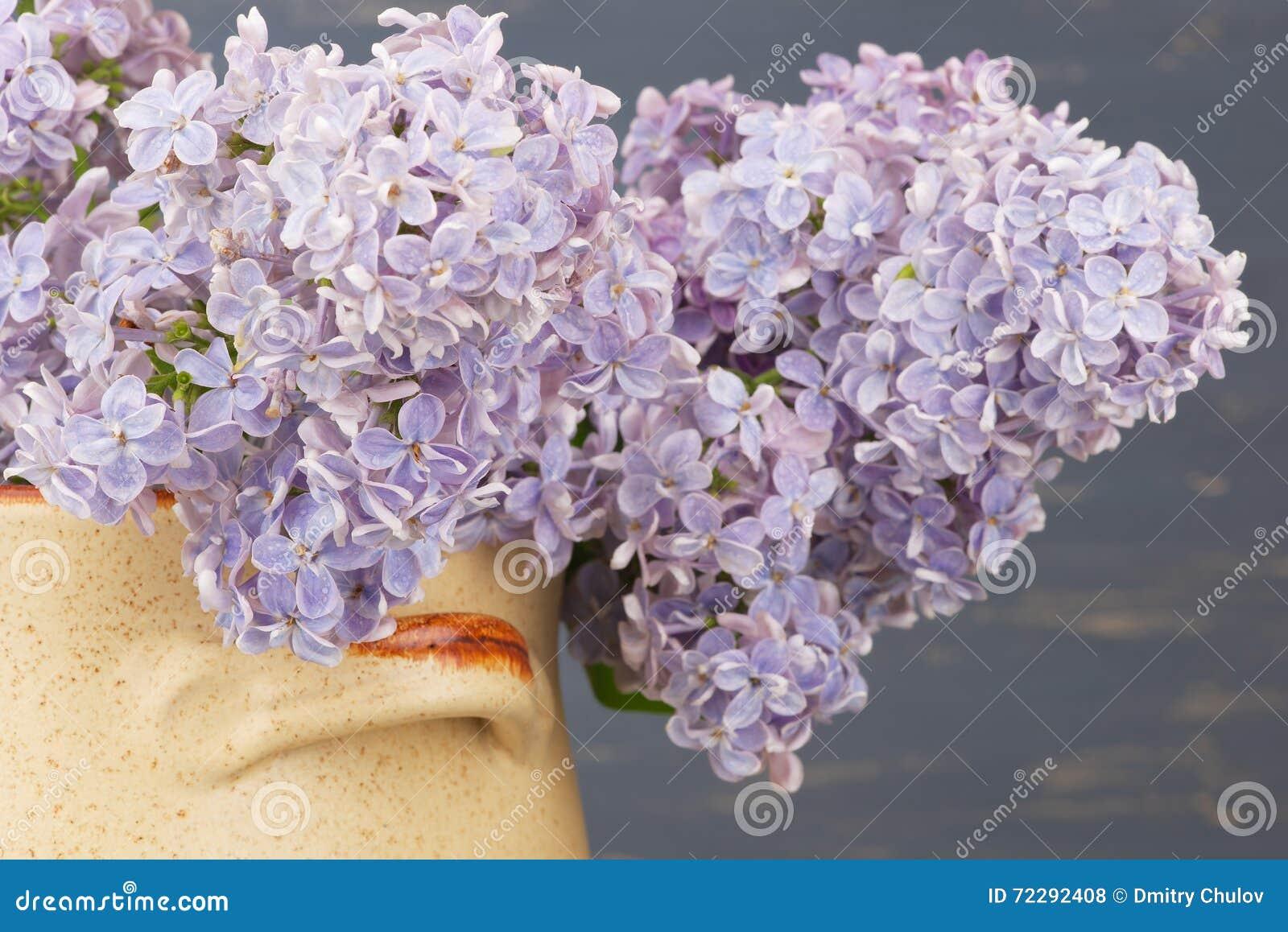 Download Свежая сирень цветет в бежевом керамическом баке против голубой предпосылки Стоковое Фото - изображение насчитывающей сад, пук: 72292408