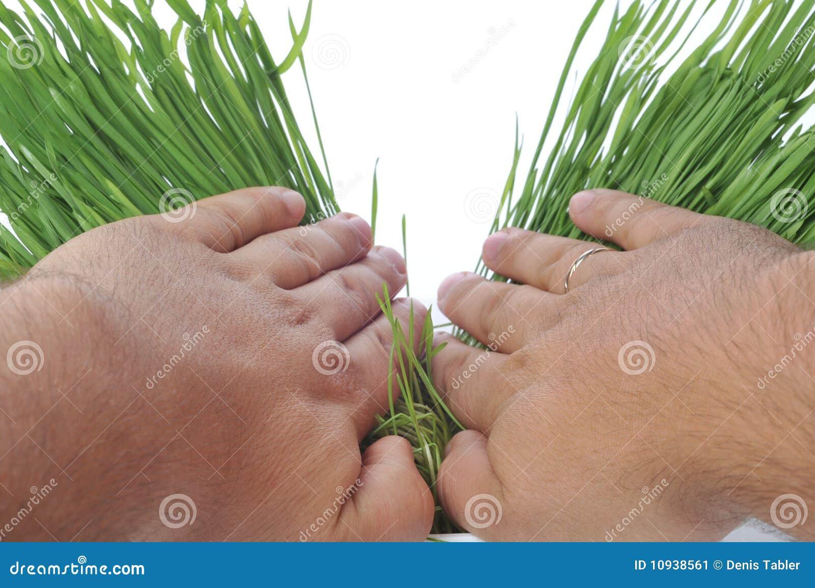 свежее распространение рук травы