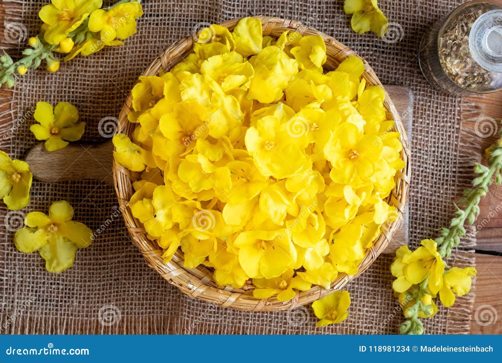 Свежее mullein цветет в плетеной корзине, взгляд сверху