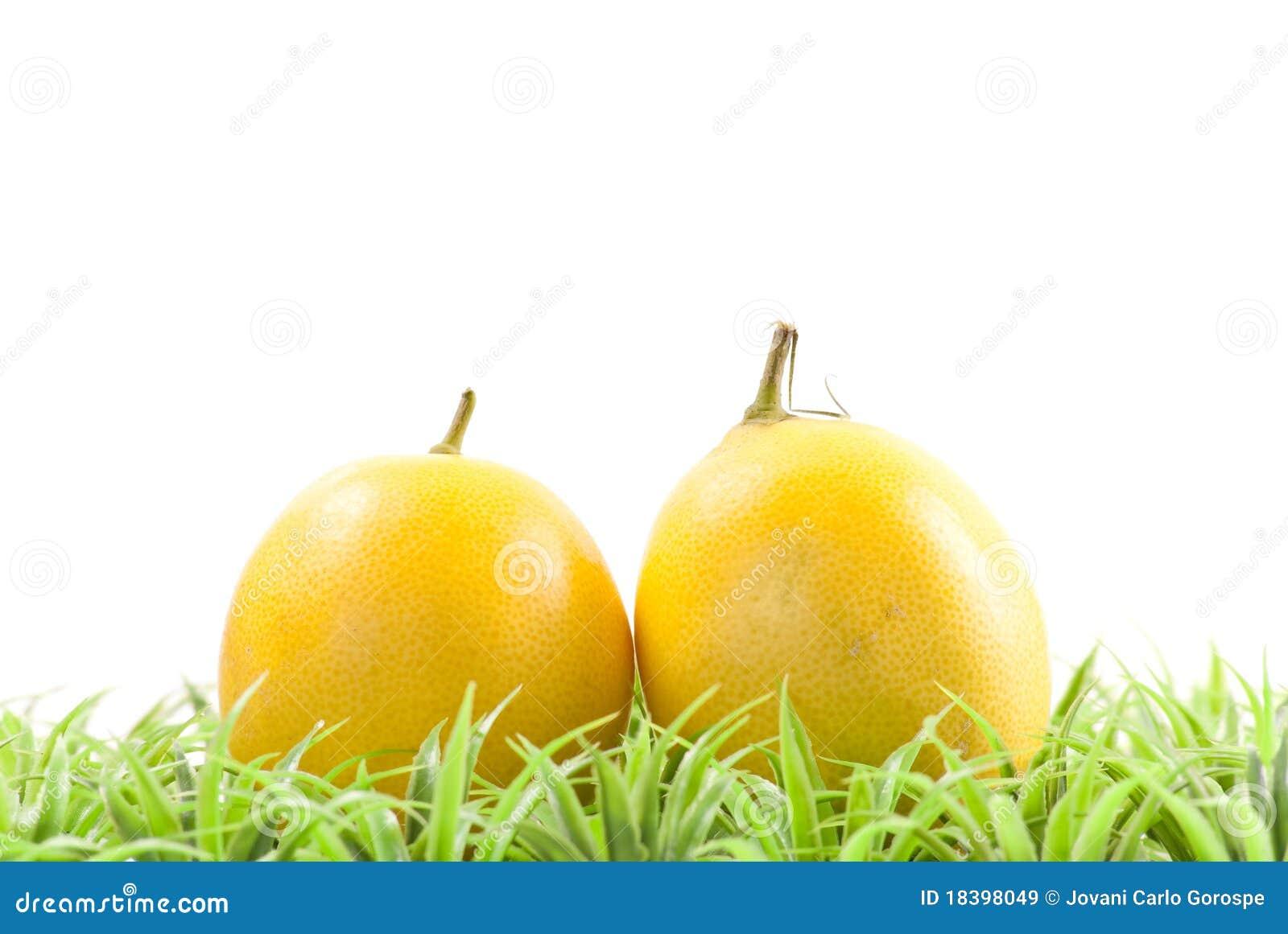 свежие выбранные лимоны