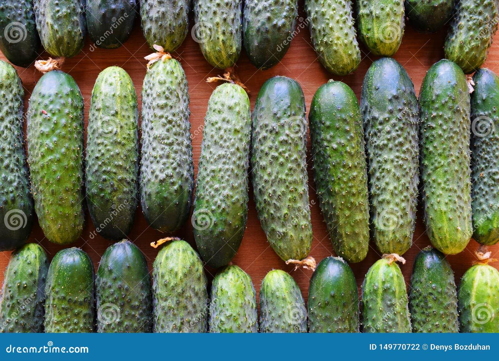 Свежие зеленые огурцы Полезные овощи и еда r Огурец содержит витамины b, a