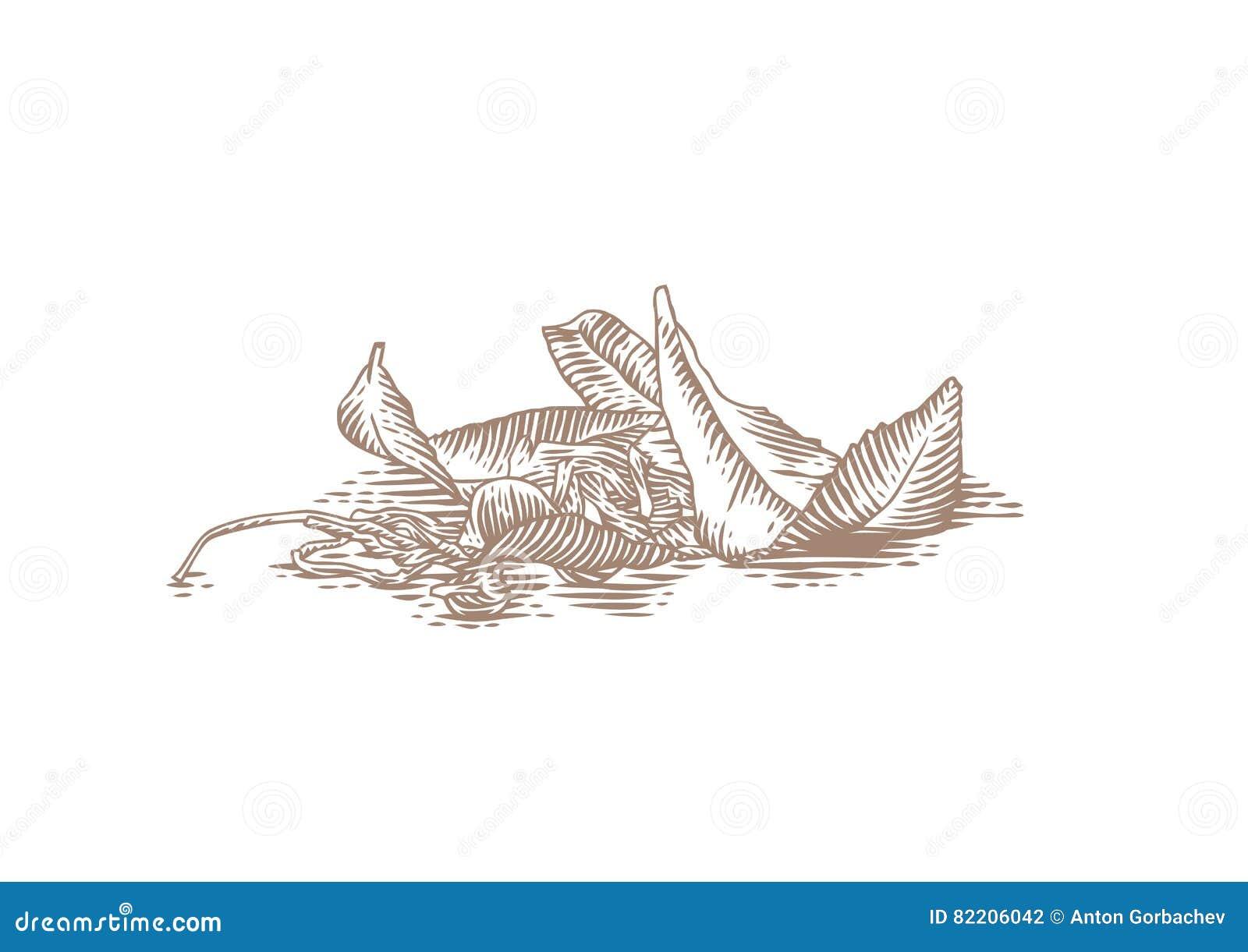 Свежие и высушенные листья чая