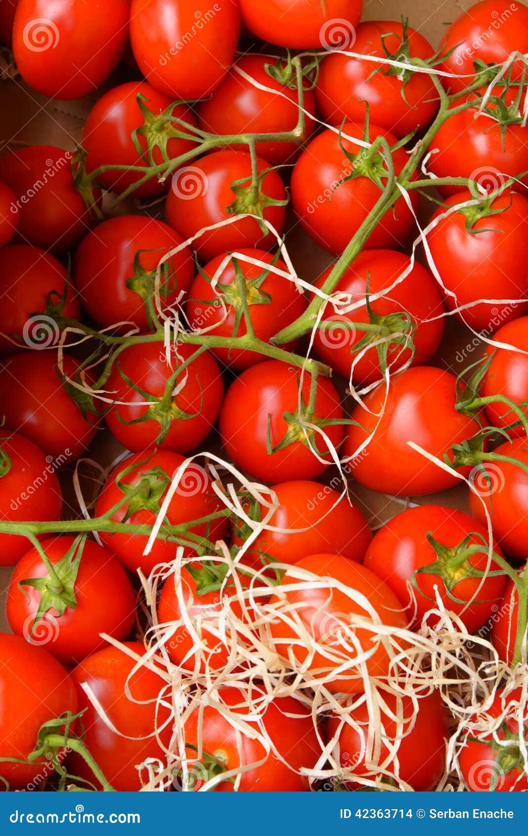 свежие красные томаты