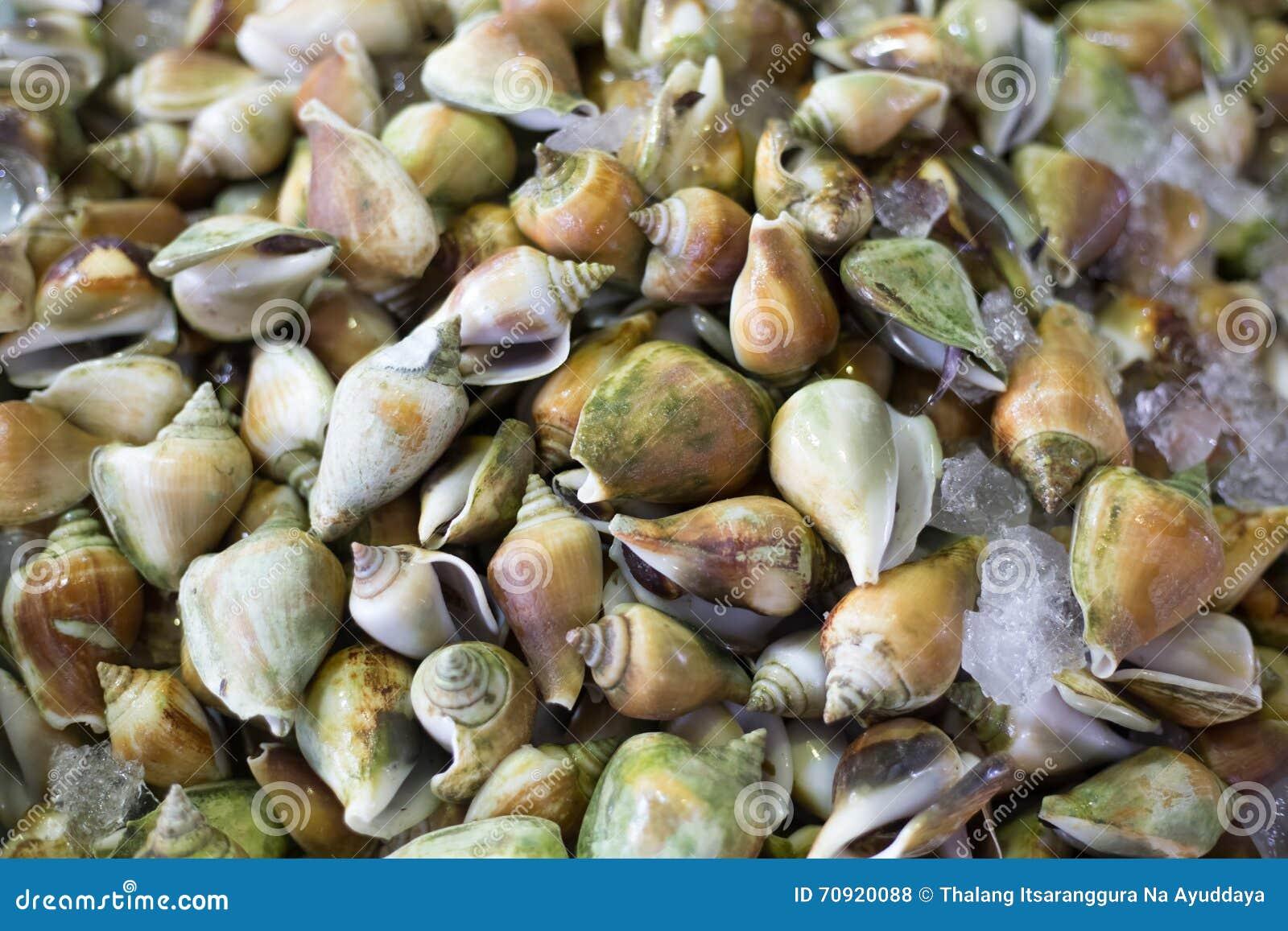 Свежие морепродукты моллюска Clams новый рынок