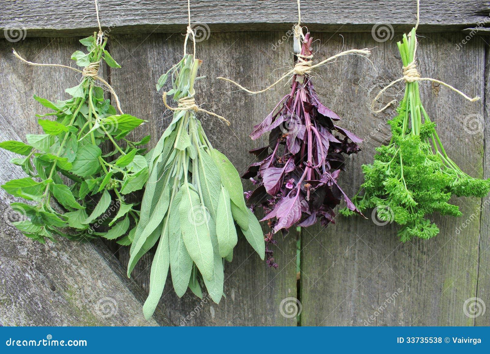 Свежие травы вися для сушить