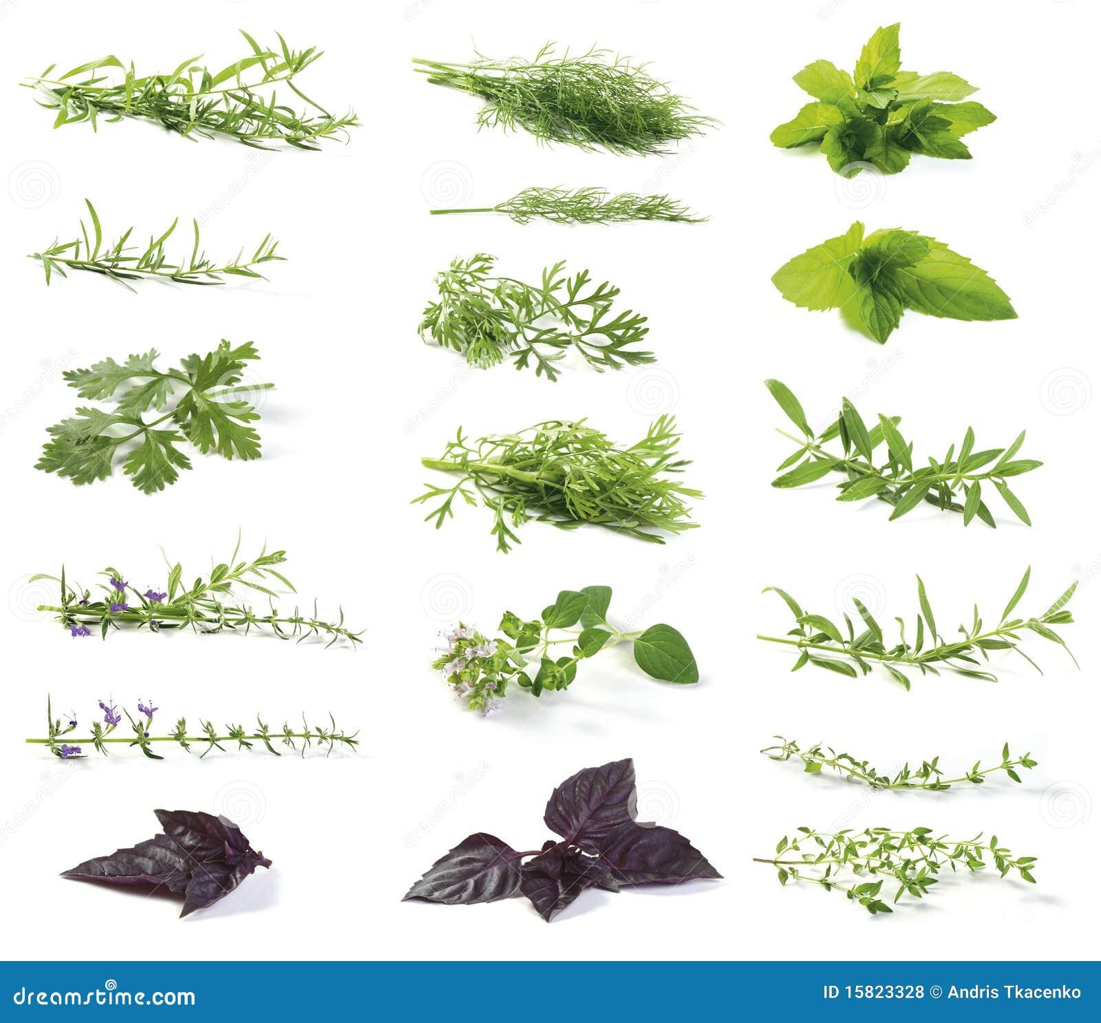 свежие травы