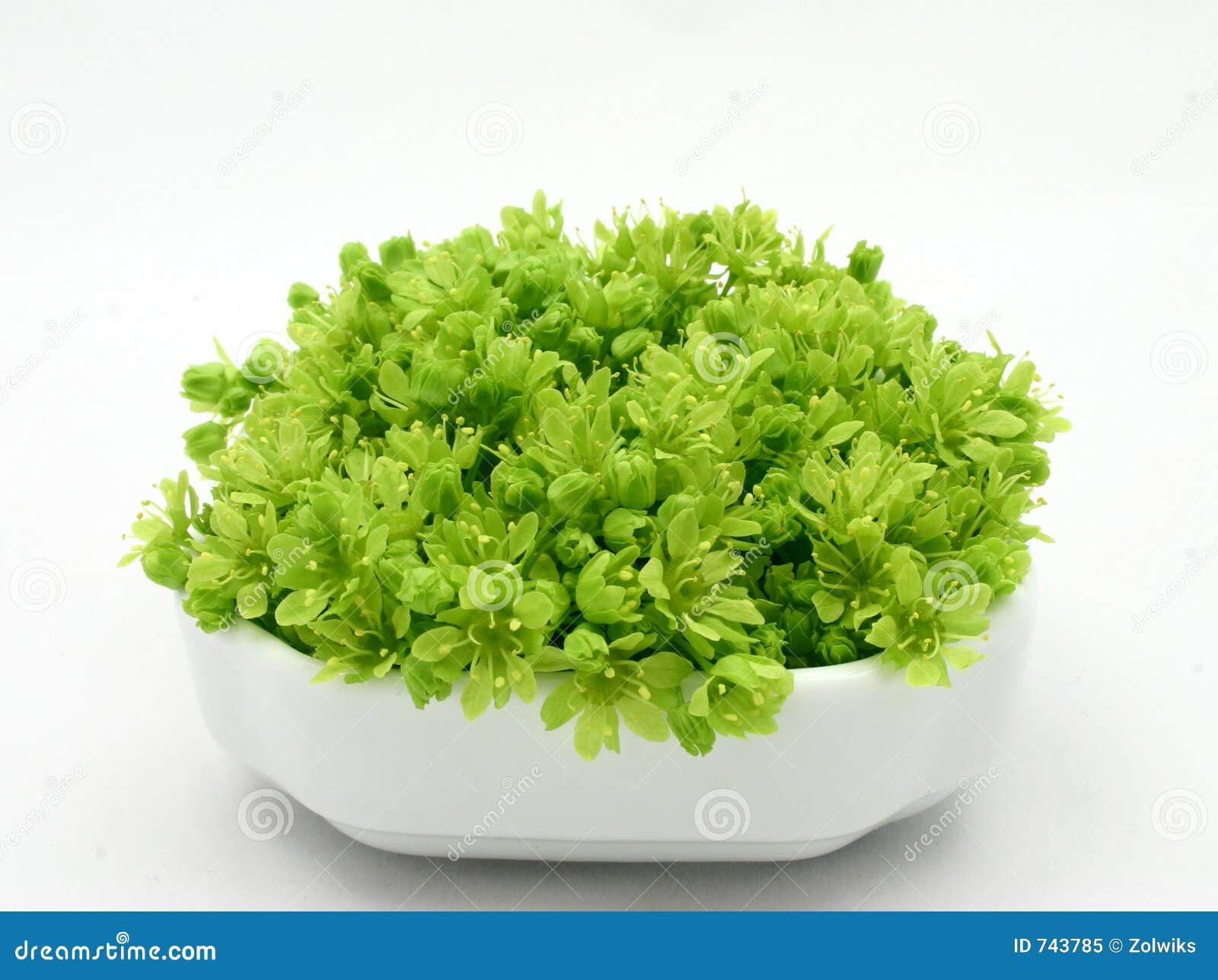 свежий зеленый цвет
