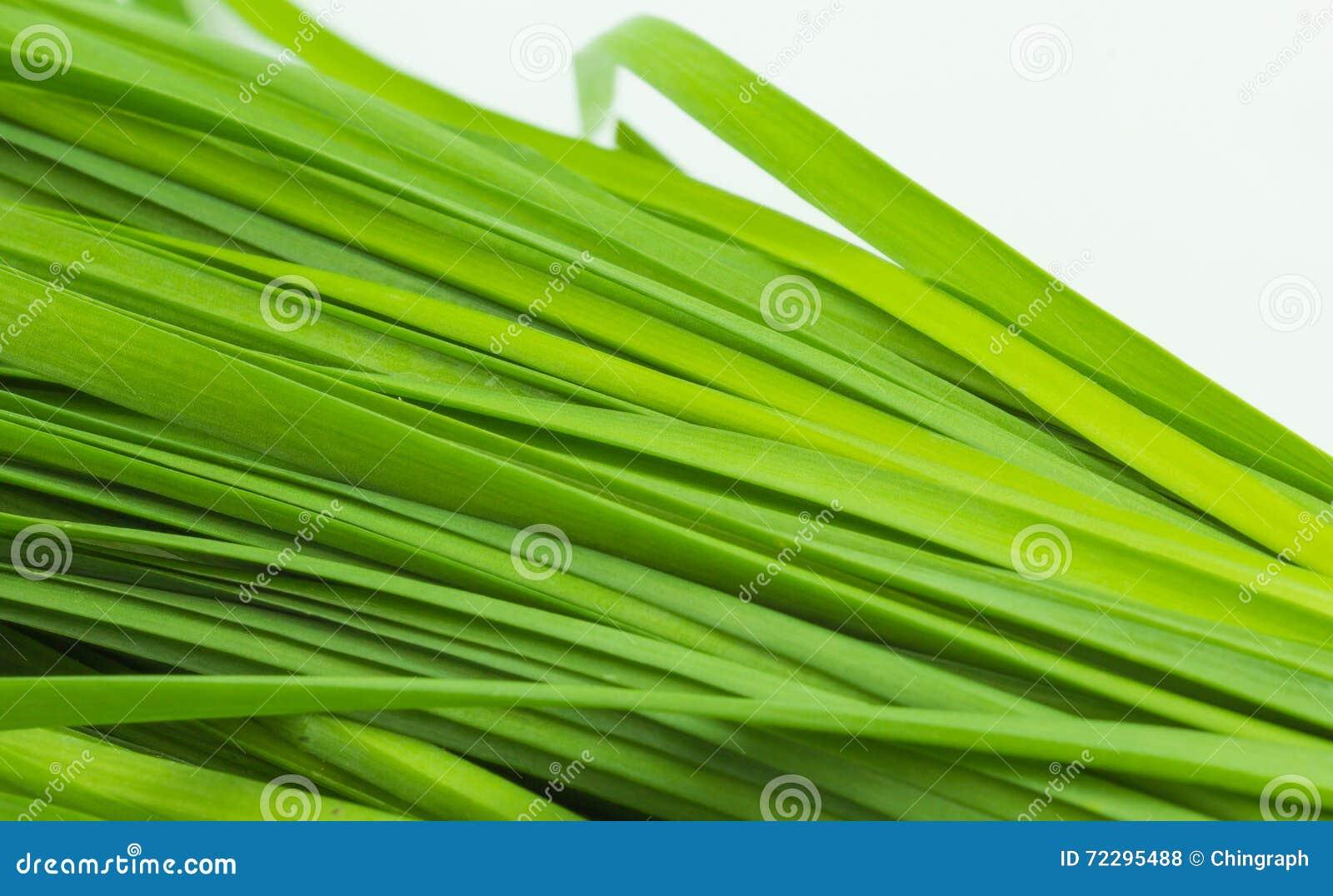 Download Свежий зеленый овощ Chives чеснока, белые Chives чеснока Стоковое Фото - изображение насчитывающей студия, порей: 72295488