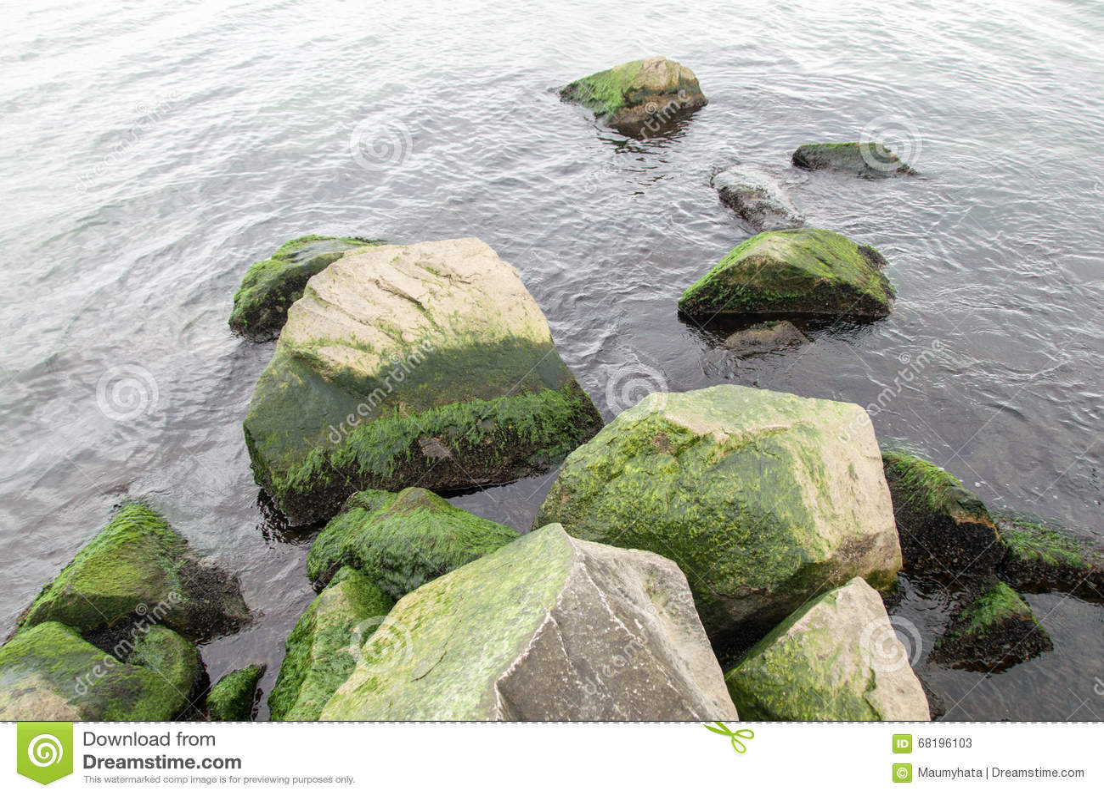 Свежий зеленый океан