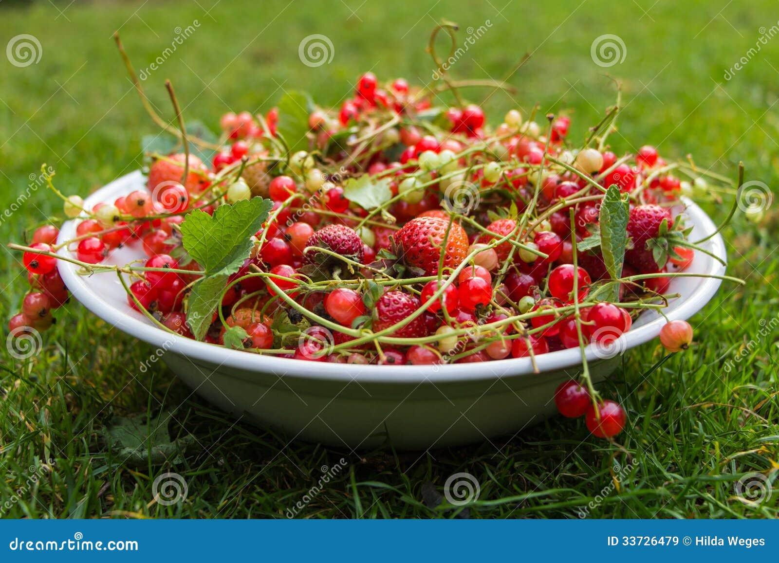 Свежий красный плодоовощ в шаре