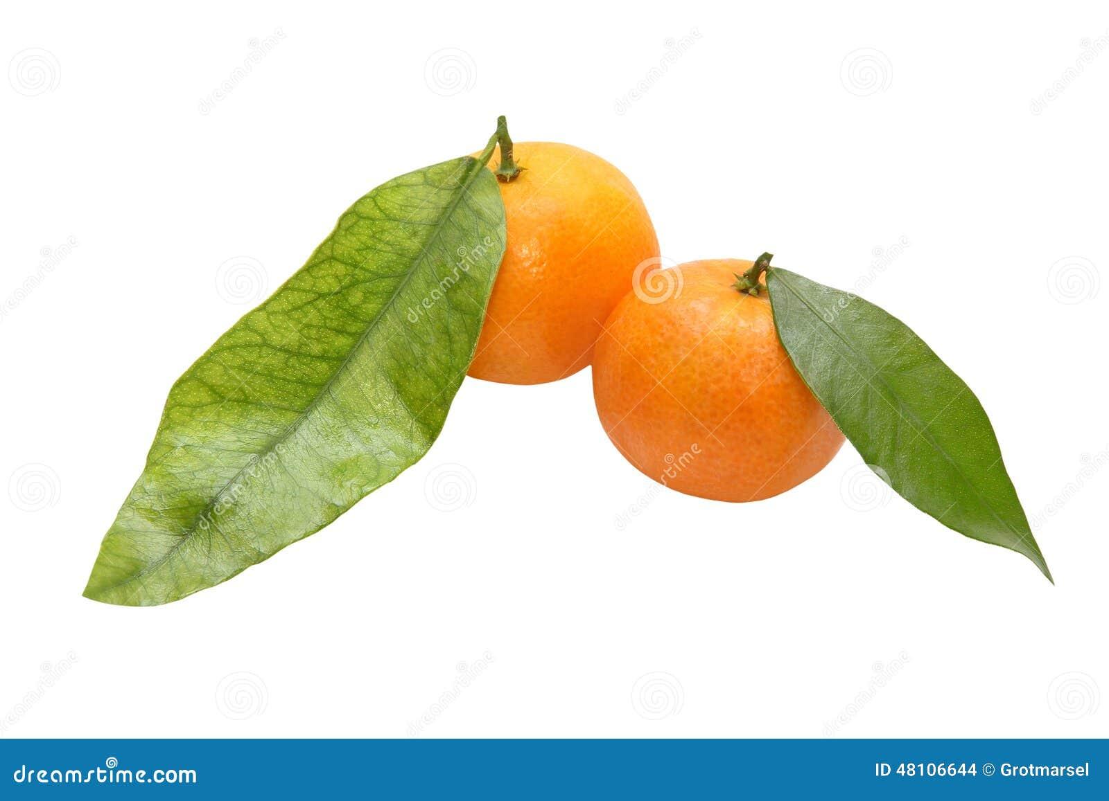 Свежий tangerine 2 с зелеными leafes изолировано