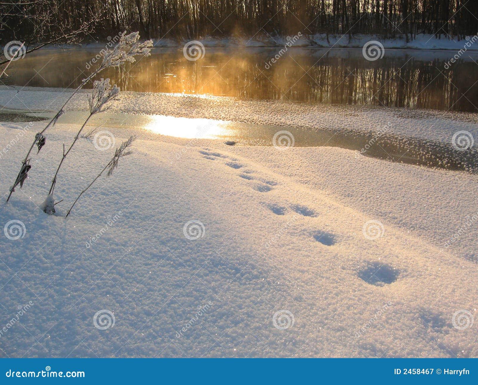 светлая зима