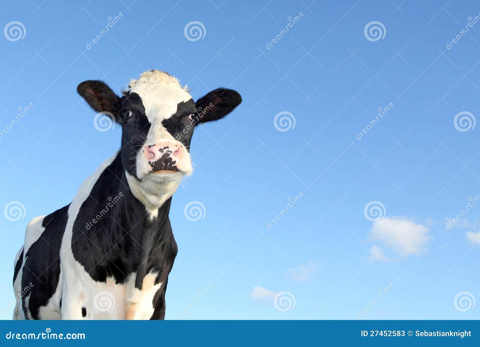 Светотеневая корова