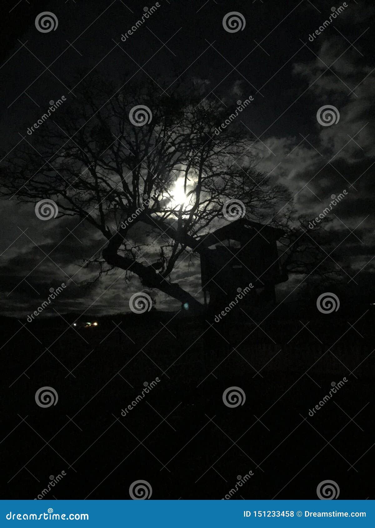 Свет взглядов украдкой полнолуния через дерево barem безлистное в осени создавая пугающее scence