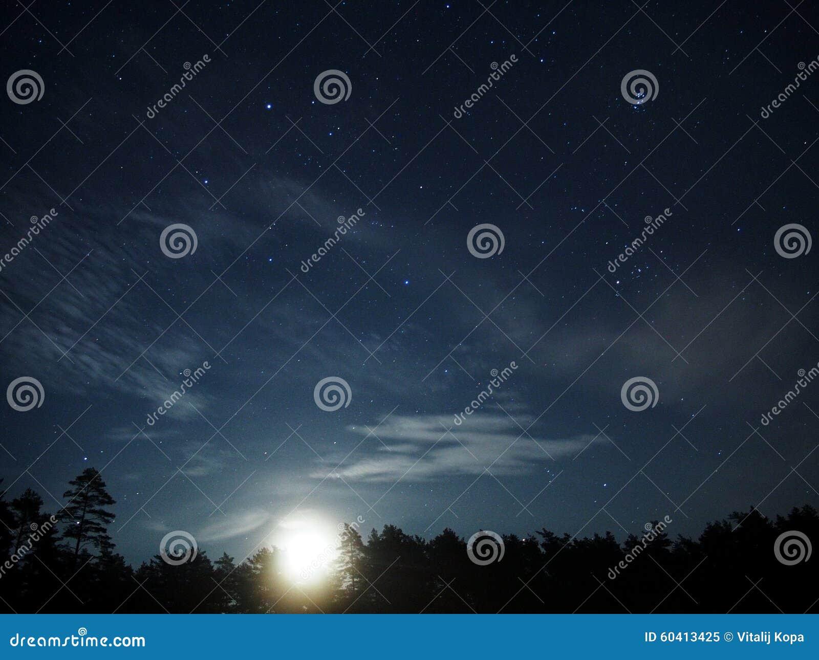 Свет и звезды луны над лесом ночи