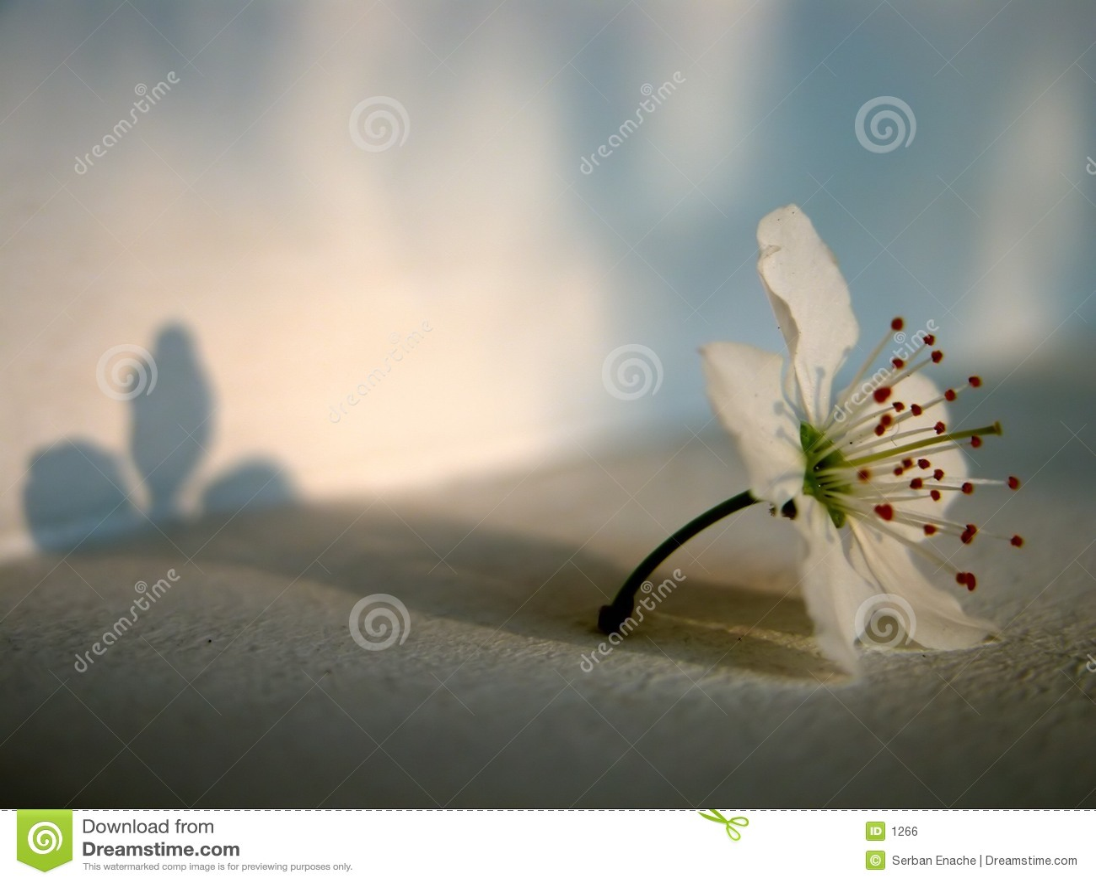 свет цветка