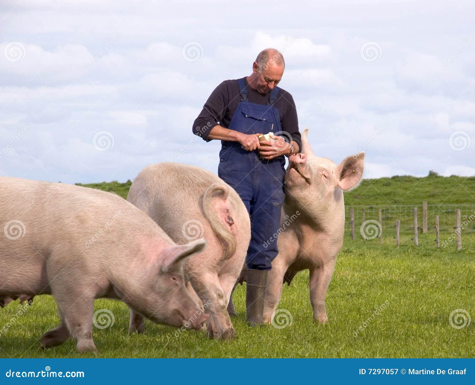 свиньи хуторянина
