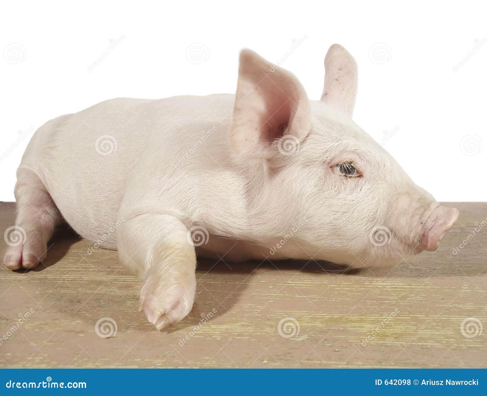 Download свинья 02 стоковое фото. изображение насчитывающей еда - 642098