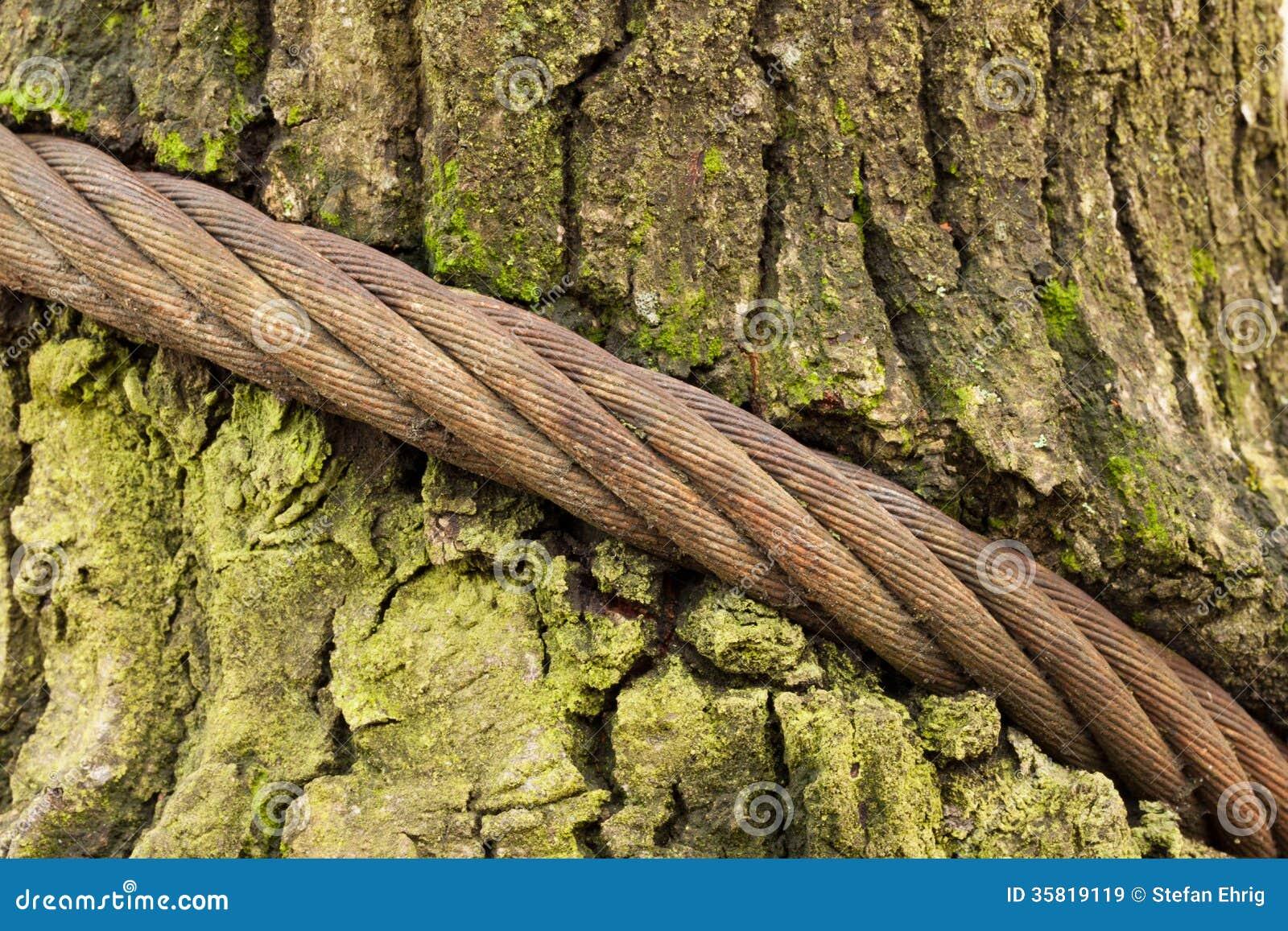 Что нибудь связанное с деревом