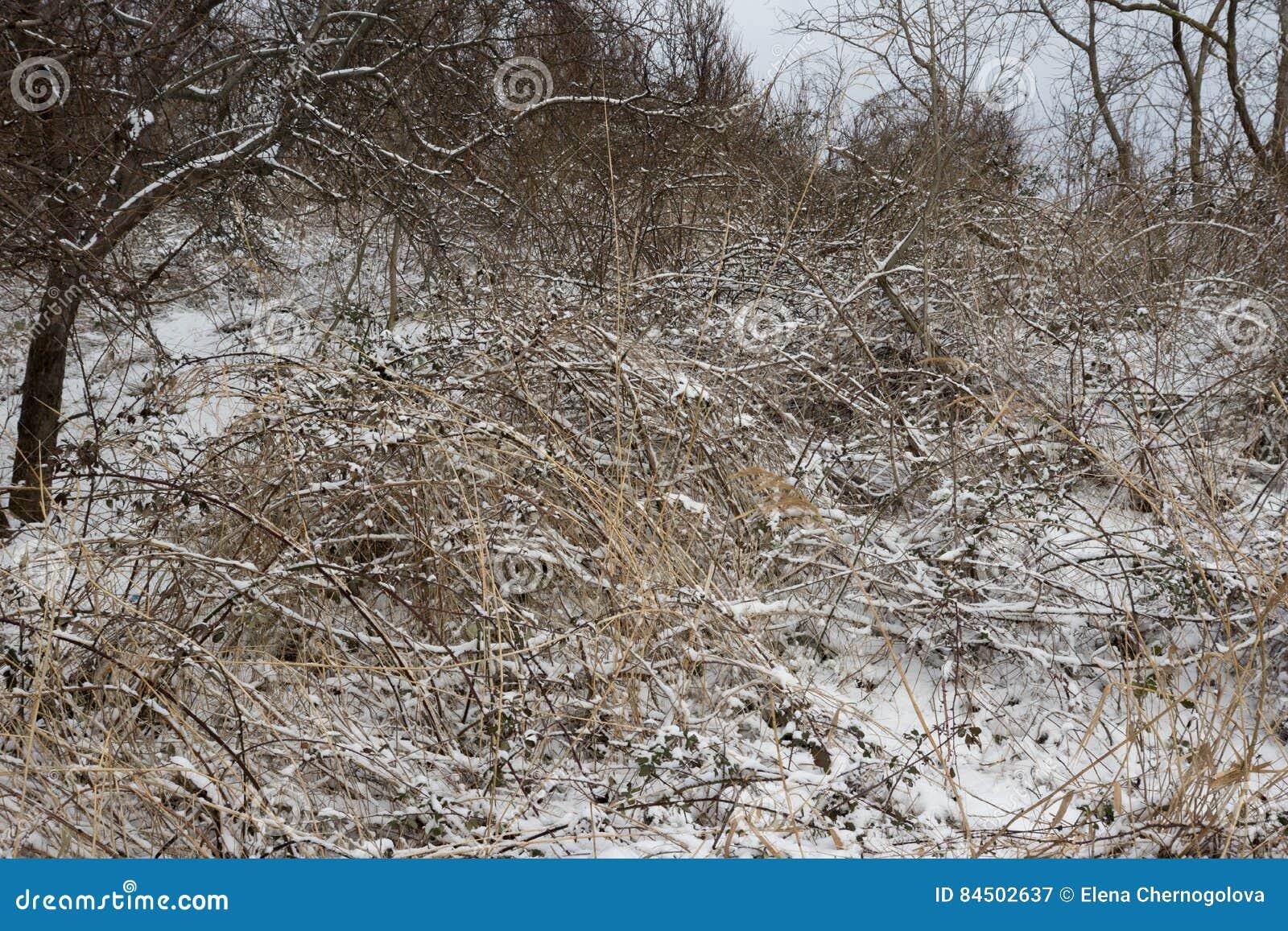 связанный с Снег фланк