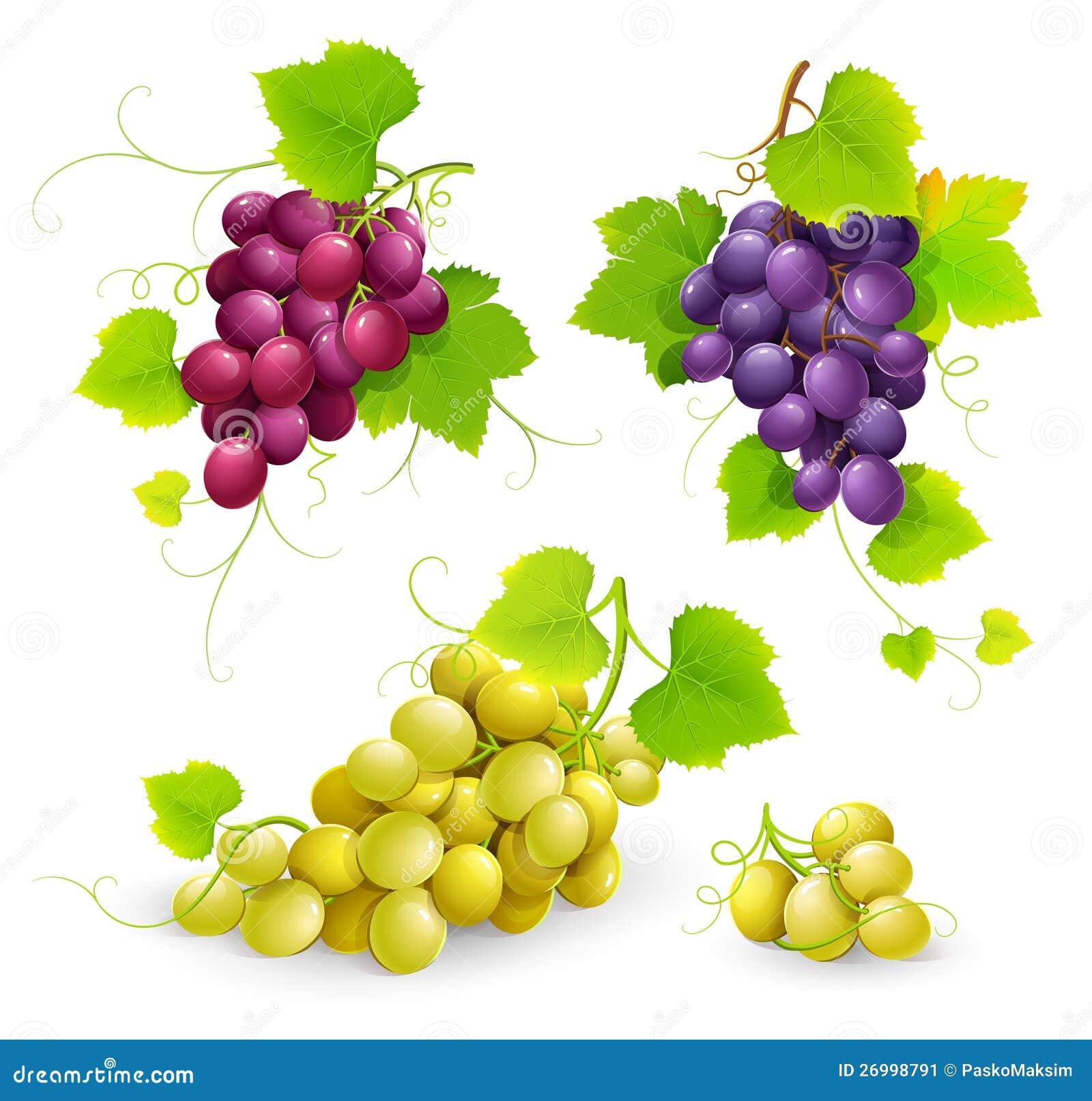 Связки винограда