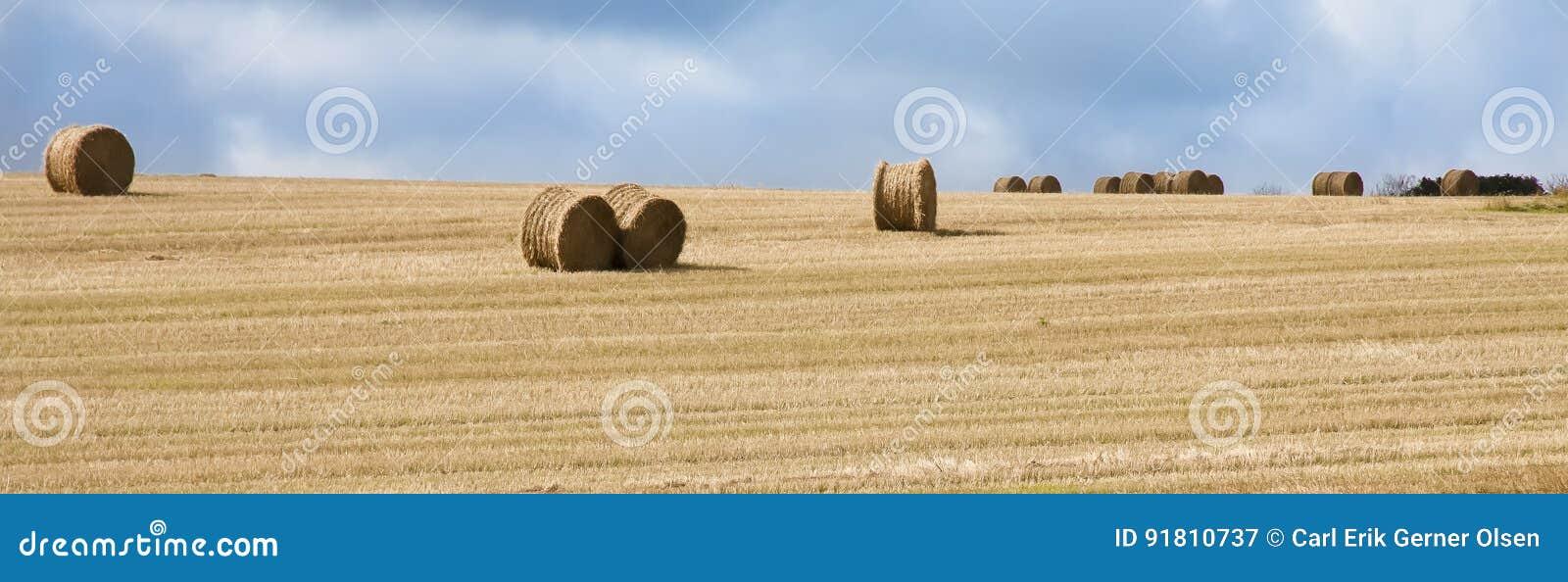 Связки сена на золотом поле