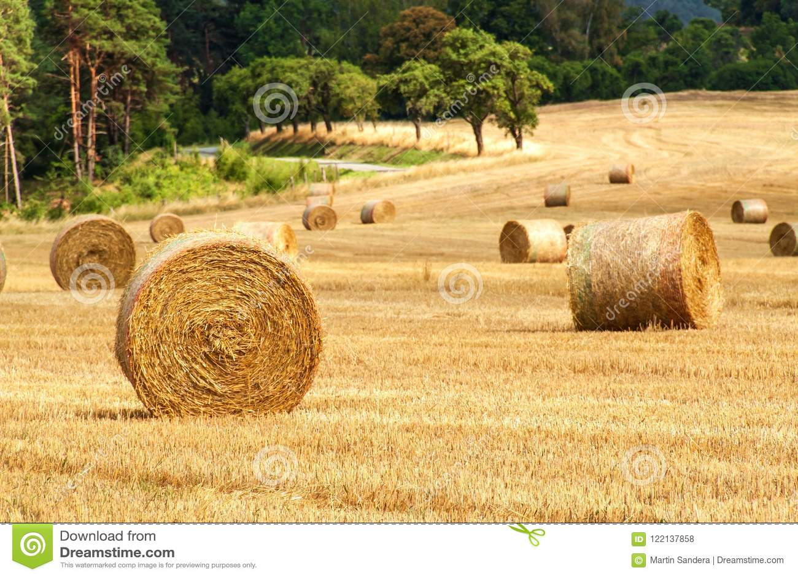 Связки соломы в поле на летнем дне леса на ферме в чехии Мозоль сбора Гористые местности Moravian пейзажа