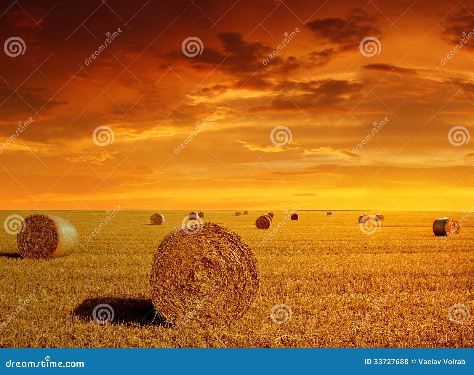 Связки соломы на обрабатываемой земле