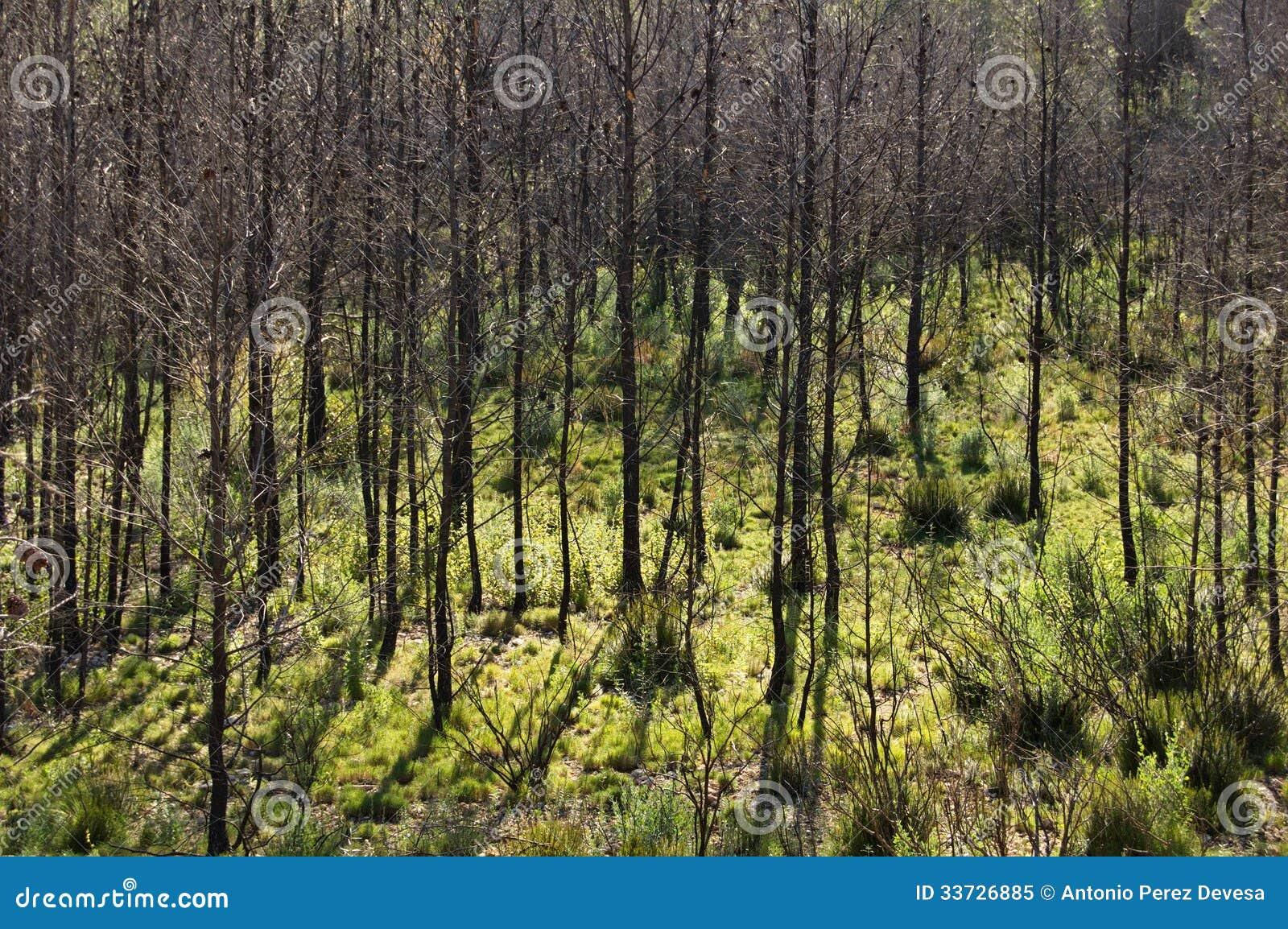 Сгорели лес