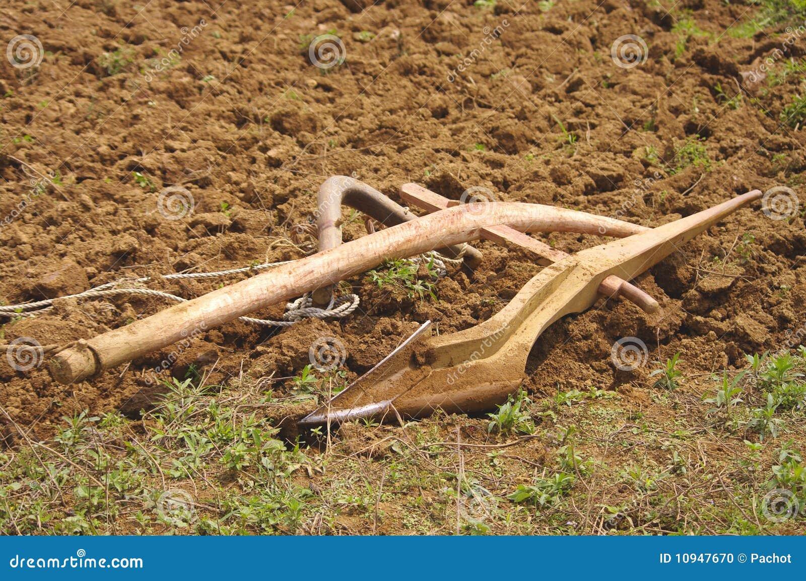северная древесина Вьетнама плужка