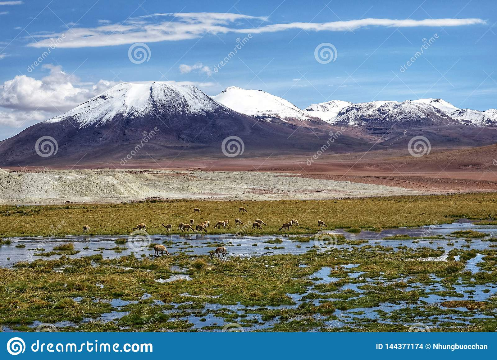 Сезон фламинго в Uyuni, Боливии