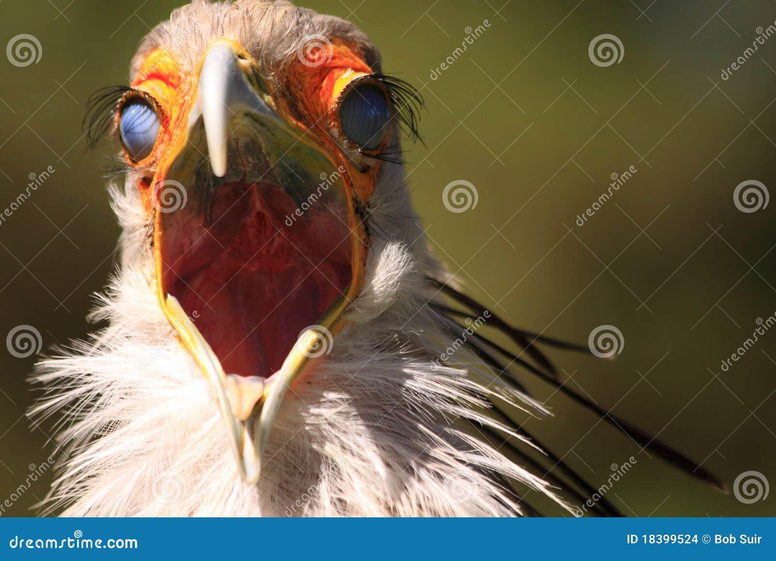 секретарша стороны птицы страшная