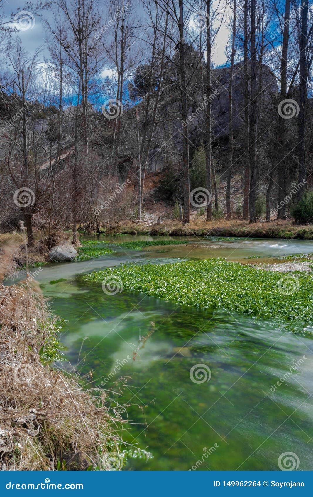 Секретное река с фантастическими аквариумными растениами