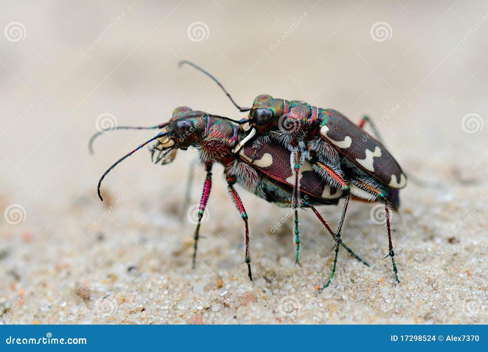 Девушка секс с жукам