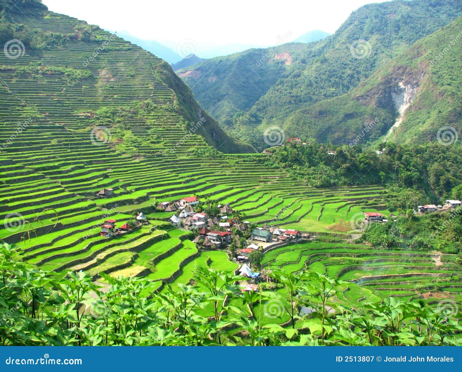 село террас риса batad